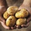 Вагітним треба обмежити споживання страв з картоплі