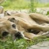 Що робити, якщо у собаки судоми?