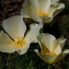 Що таке льон білий? Корисні властивості, опис і застосування