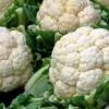 Цвітна капуста: корисні властивості та агротехніка
