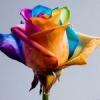 Квіти на 8 березня: оригінальні пофарбовані букети