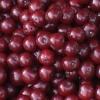 Зберігання брусниці: заморожуємо ягоду, готуємо запас або варимо вариво