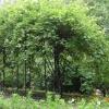 Використання опори для дерев