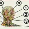 Японський масаж обличчя асахі: відео російською мовою для навчання правильній техніці