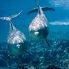 Як намалювати дельфіна в морі