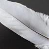 Як намалювати перо птиці швидко і красиво?