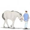 Як прогулювати травмовану кінь