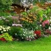 Які багаторічні квіти посадити в саду влітку