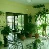 Які рослини розмістити в будинку по фен-шуй
