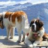 Які вітаміни підходять для собак великих порід