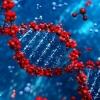 Знайдений ген, відповідальний за успадкування інтелекту
