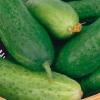 Огірок - користь і корисні властивості огірків