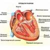 Патології лівого шлуночка серця