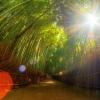 Посуд з бамбука: властивості і особливості застосування