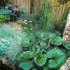 """Проект саду """"таємний куточок природи"""""""