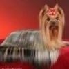 Собаки найвідоміших порід з фотографіями
