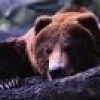 Збираючись на полювання на бурого ведмедя