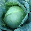 Сорт капусти білокачанної: інвента f1
