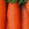Сорт моркви: тинга f1