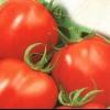 Сорт томата: альтруїст f1