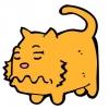 Судоми у кішок: що робити?