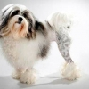 Топ 10: найдорожчі породи собак в світі з фото