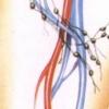 Запалення лімфовузлів у паху у чоловіків і жінок