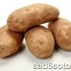 Вирощуємо картоплю в теплиці