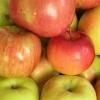 Жирна плівка на яблуках - що це?